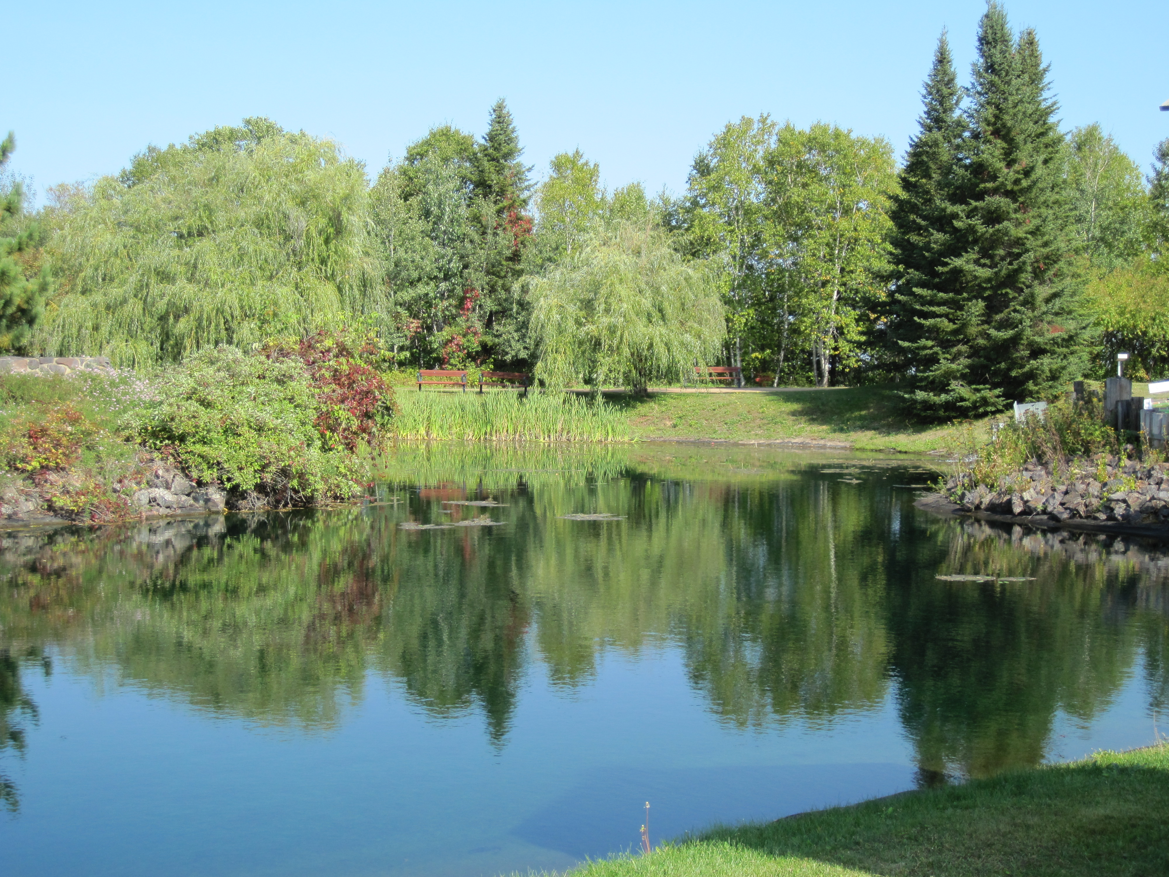 Peaceful pond