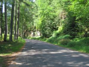 Path around the bend - Blog