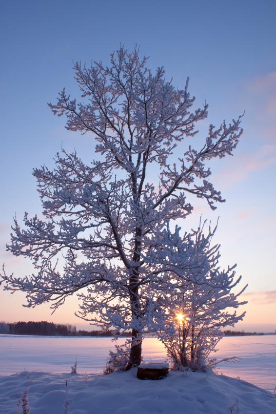 Tree on winter lake small