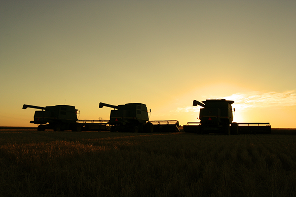Combines Harvesting at Sunset